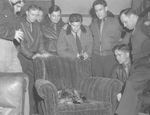 Dog gave birth to pups in Officers' Club, May 5, 1944.